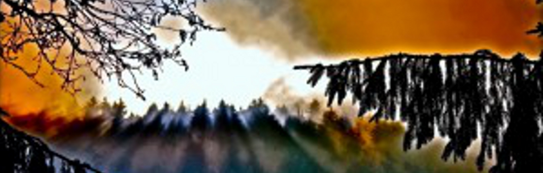 "1Mountain View Forest Lights by PLATUX modern ART Photography 1102x3501 - Andreas Denstorf - ""Glücksmomente"""