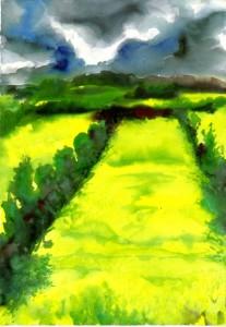 Rapsfeld in Bluete 207x300 - Günter Grass - Maler, Bildhauer und Zeichner